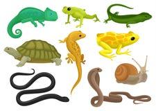 爬行动物和两栖动物集合,变色蜥蜴,青蛙,乌龟,蜥蜴,壁虎,氚核在白色背景的传染媒介例证 库存例证