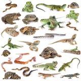 爬行动物和两栖动物 库存图片