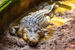 爬行动物在巴厘岛,印度尼西亚的动物园里 库存图片