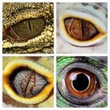爬行动物眼睛 免版税图库摄影