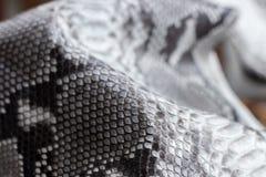 爬行动物蛇纹理特写镜头,时尚之字形snakeskin Python图片 免版税库存图片