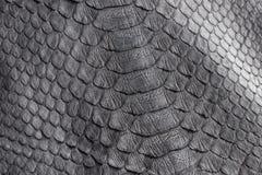 爬行动物蛇纹理特写镜头,时尚之字形snakeskin Python图片 免版税图库摄影
