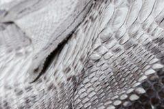 爬行动物蛇纹理特写镜头,时尚之字形snakeskin Python图片 免版税库存照片