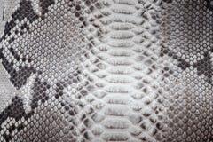 爬行动物蛇纹理特写镜头,时尚之字形snakeskin Python图片 库存照片