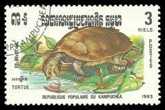爬行动物,淡水乌龟 库存图片