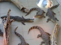 爬行动物 爬行动物在动物园里 鳄鱼,鳄鱼 库存照片