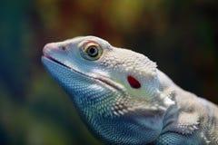 爬行动物画象 免版税库存图片
