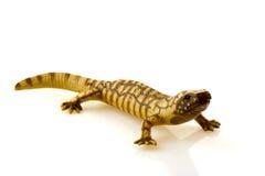 爬行动物 免版税图库摄影