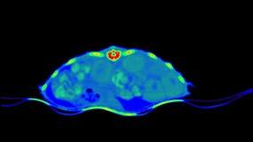 爬行动物CT扫描 影视素材