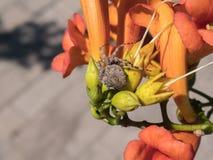 爬行在一朵五颜六色的花的蜘蛛 库存照片