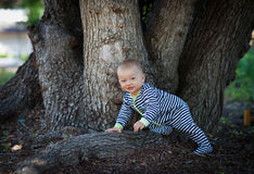 爬行在一棵巨大的树的根的可爱的男婴 免版税库存图片