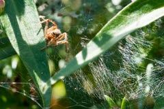 爬行在他的蜘蛛网的丑恶的蜘蛛 免版税库存照片