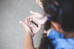 爬行在儿童手上的黑毛虫 库存图片