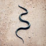 爬行在地面上的草蛇 卡累利阿俄罗斯 库存照片