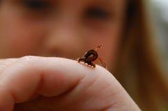 爬行在女孩的手上的英寸蠕虫 免版税库存图片