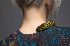 爬行在妇女` s肩膀的水蟒 免版税库存照片