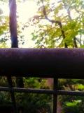 爬行在森林道路附近的尺蠖 免版税库存照片