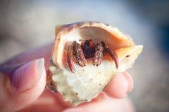 爬行在海滩石渣的寄居蟹 免版税库存照片