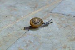 爬行在混凝土的蜗牛 免版税库存图片