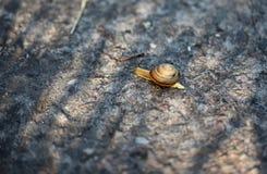 爬行在石头的特写镜头蜗牛 库存照片