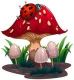爬行在红色巨型蘑菇的臭虫 库存照片