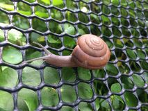 爬行在网的蜗牛 图库摄影
