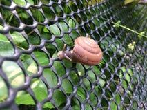 爬行在网的蜗牛 库存图片