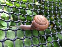 爬行在网的蜗牛 免版税库存图片