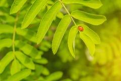 爬行在花的一只小甲虫 库存照片