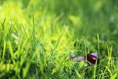 爬行在草的蜗牛 免版税库存照片