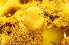 爬行在蘑菇的蚂蚁 免版税库存图片