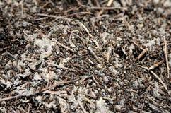 爬行在蚁丘的工作者蚂蚁在森林 免版税库存图片