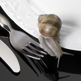 爬行在餐具的葡萄树蜗牛 免版税图库摄影