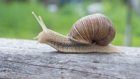 爬行在绿色的一个木板的蜗牛 库存图片