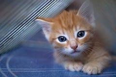 爬行小猫红色 免版税图库摄影