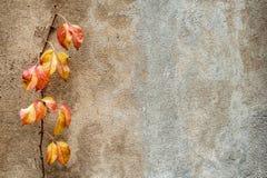 爬行物植物背景 库存图片