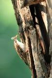 爬行物结构树 库存照片