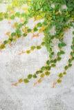爬行物绿色植物墙壁 图库摄影