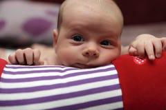 爬行的卷的想法的新出生的婴孩 免版税库存照片