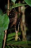 爬行的昆虫 库存照片