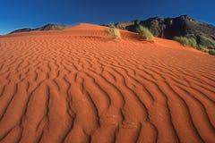 爬行的沙丘 免版税库存图片