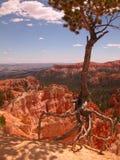 爬行的结构树 免版税库存图片