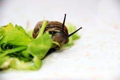 爬行的蜗牛照片  库存图片