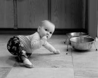 爬行的婴儿试图吃爱犬食物 免版税库存照片