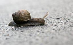 爬行蜗牛 图库摄影