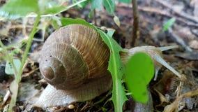 爬行蜗牛 免版税图库摄影