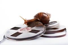爬行记录员蜗牛磁带 免版税库存图片
