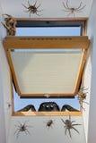 爬行通过一个开窗口的蜘蛛 库存图片