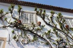 爬行obidos的葡萄牙房子的植物 免版税库存照片