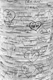 爱在恋人` s车道,绿色山墙遗产地方的树雕刻的消息 免版税图库摄影